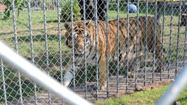 Tony the Tiger: The Individual - Animal Legal Defense Fund