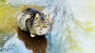 Fifth Circuit Rules that Animal Crush Video Law Prohibits ...