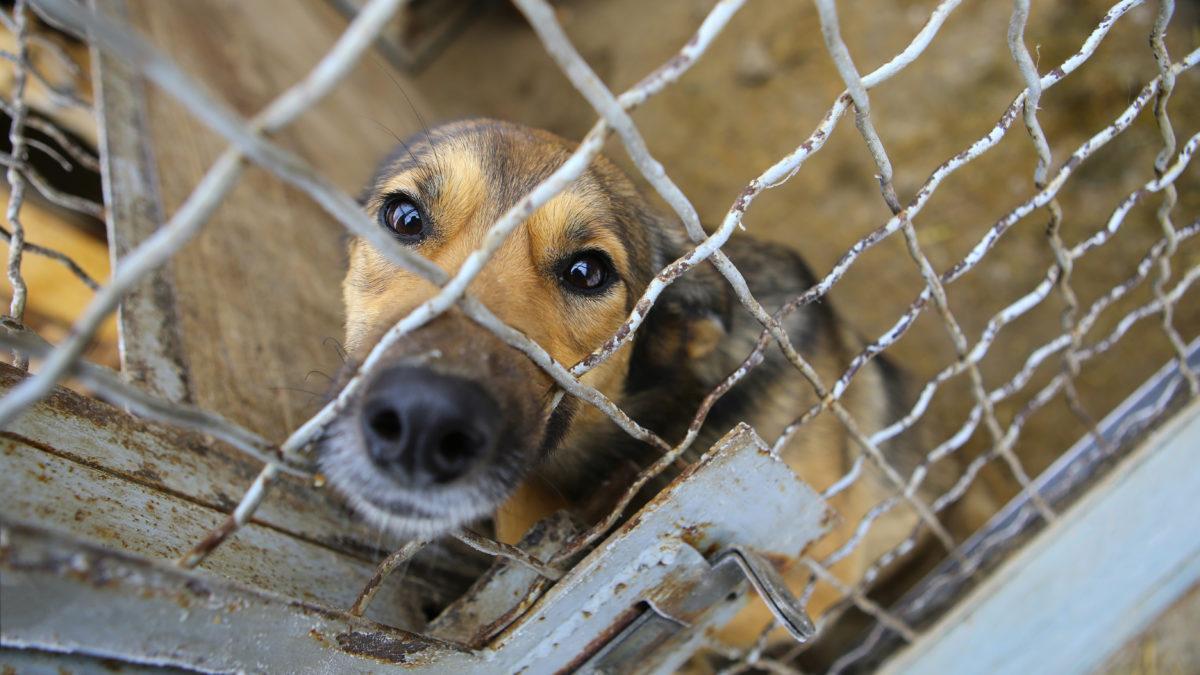 Criminal Justice - Animal Legal Defense Fund