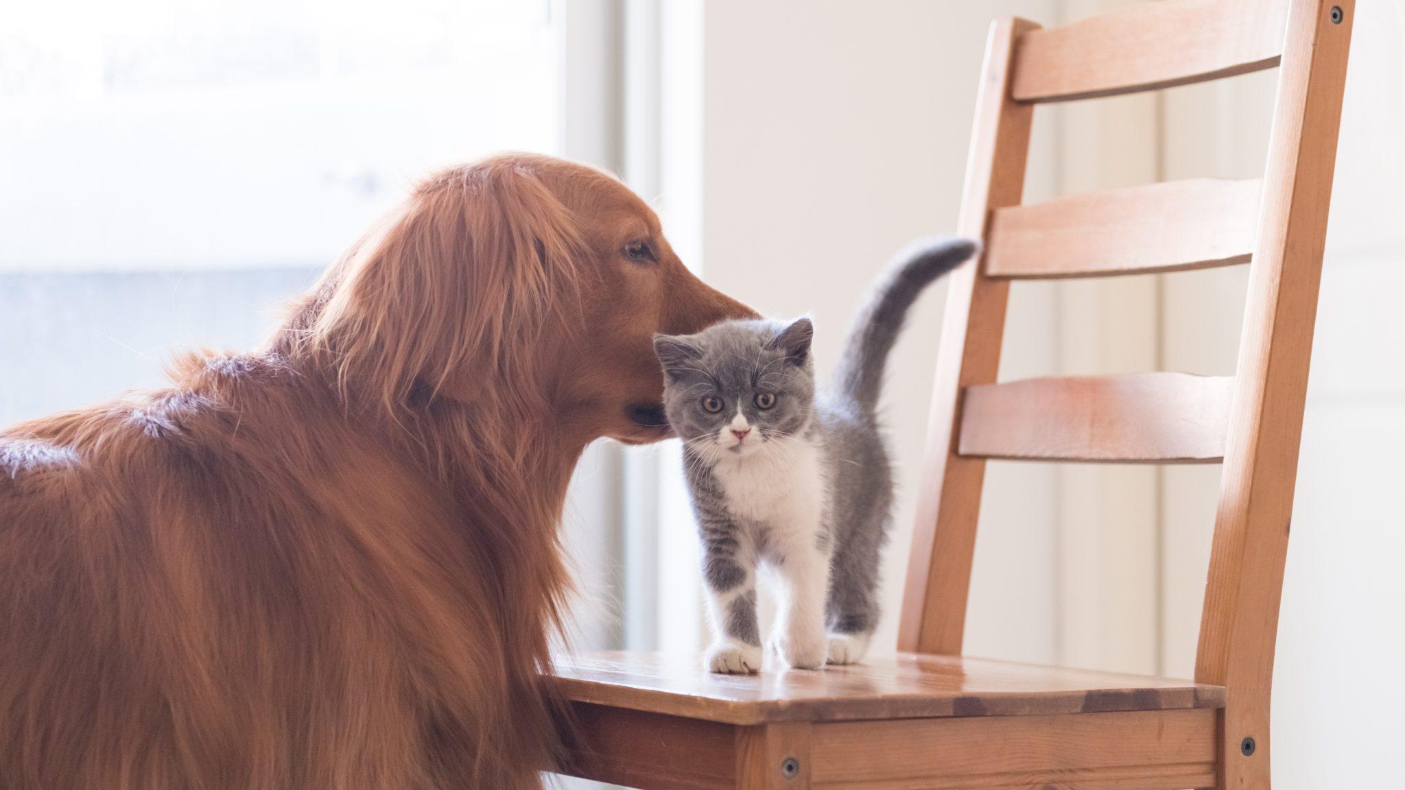 Animals' Legal Status - Animal Legal Defense Fund