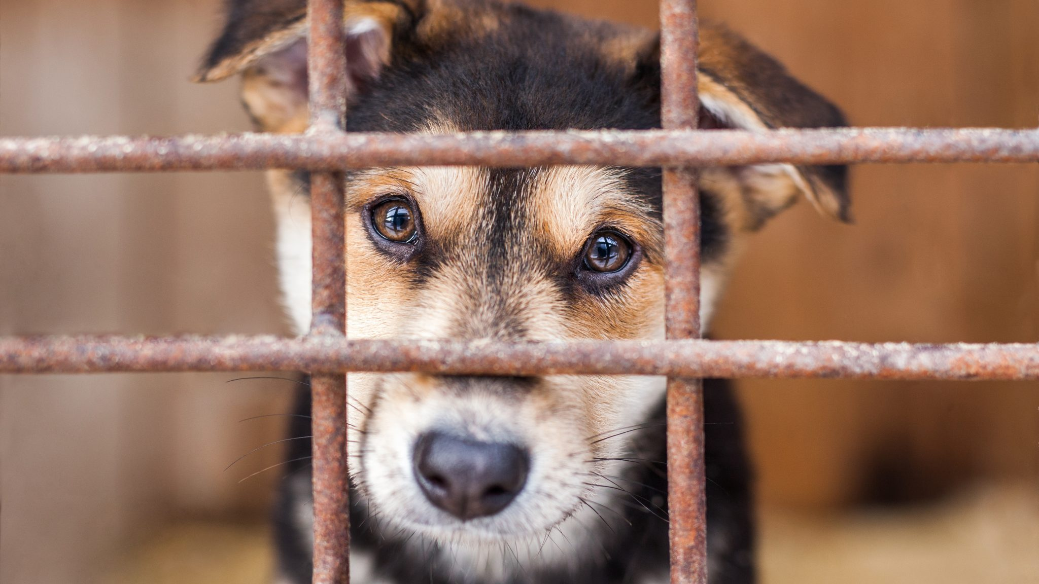 Animal Legal Defense Fund Announces Resolution of Lawsuit