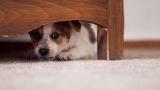 Animal Cruelty and Domestic Violence - The Link Between
