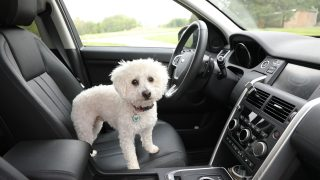 Oregon Becomes 11th State To Pass Good Samaritan Law Protect Dogs Left In Hot Cars