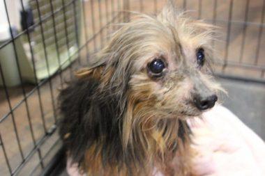Seeking Enforcement of Pennsylvania's Dog Law - Animal Legal Defense