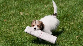 Writing Letters to the Editors - Animal Legal Defense Fund