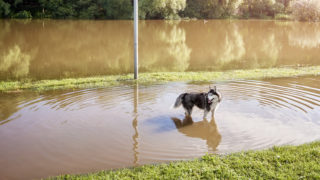 The PETS Act, when companion animals are affected by natural disasters