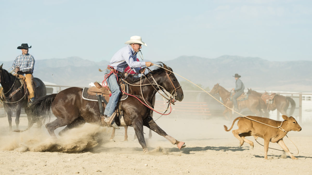 Rodeo Facts: The Case Against Rodeos