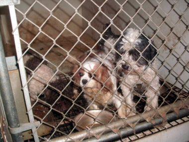 Puppy Mills Animal Legal Defense Fund
