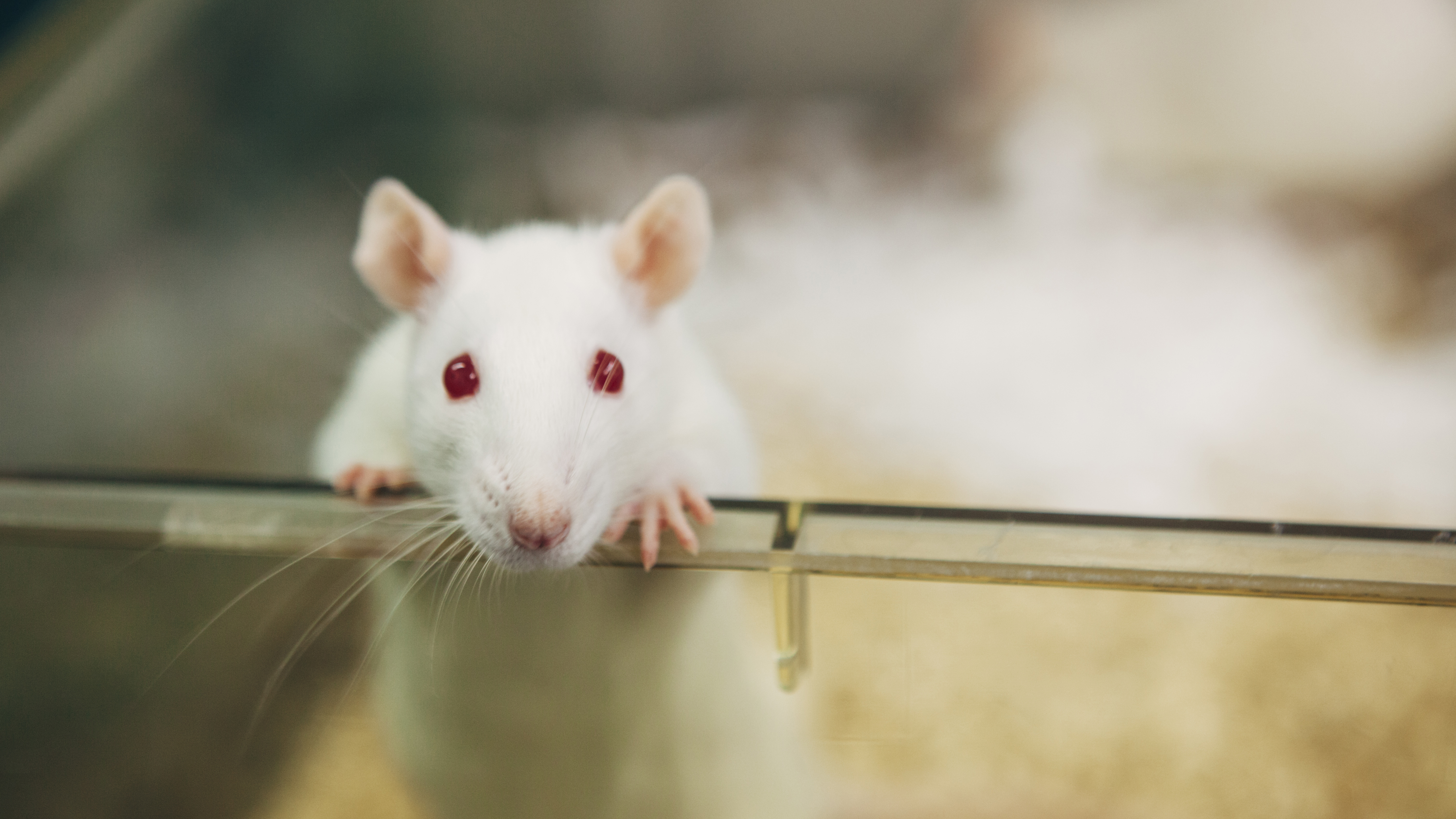 federal laws and agencies involved with animal testing - animal