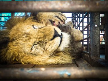 Captive Animals - Animal Legal Defense Fund