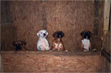 Seeking Enforcement of Pennsylvania's Dog Law - Animal Legal