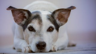 How to Help a Neighbor's Neglected Animal