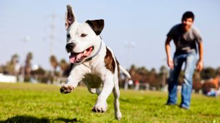 What To Do If Your Dog is in Danger of Being Declared