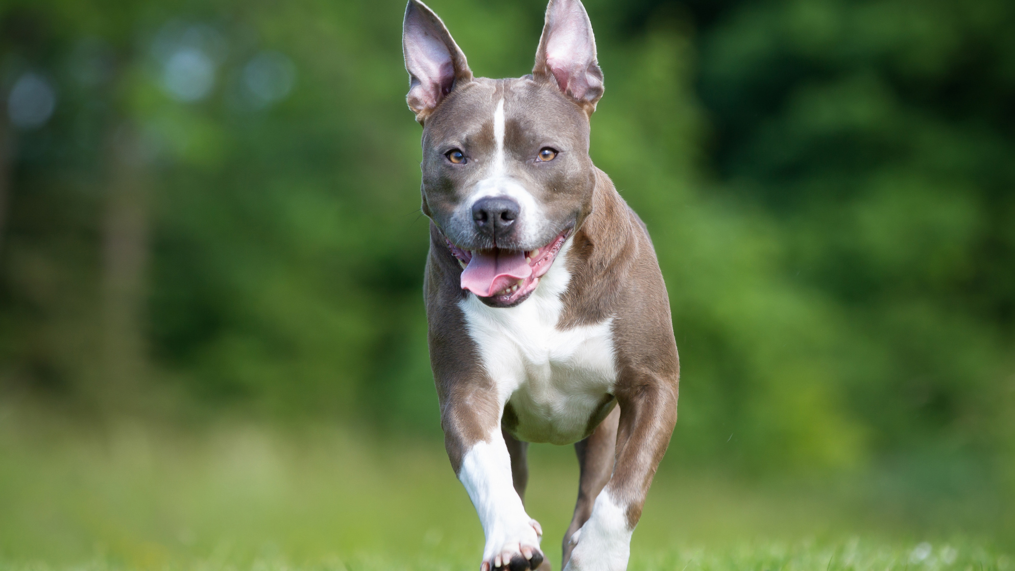 causes and effects of animal abuse