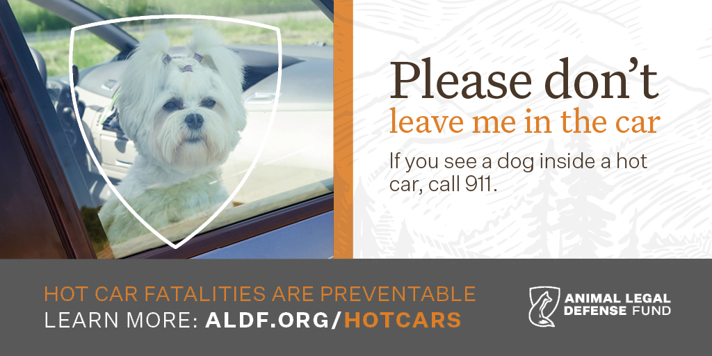 100+ Dogs In Hot Cars Flyer – yasminroohi