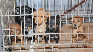 Florida: Say No to Puppy Mills - Animal Legal Defense Fund