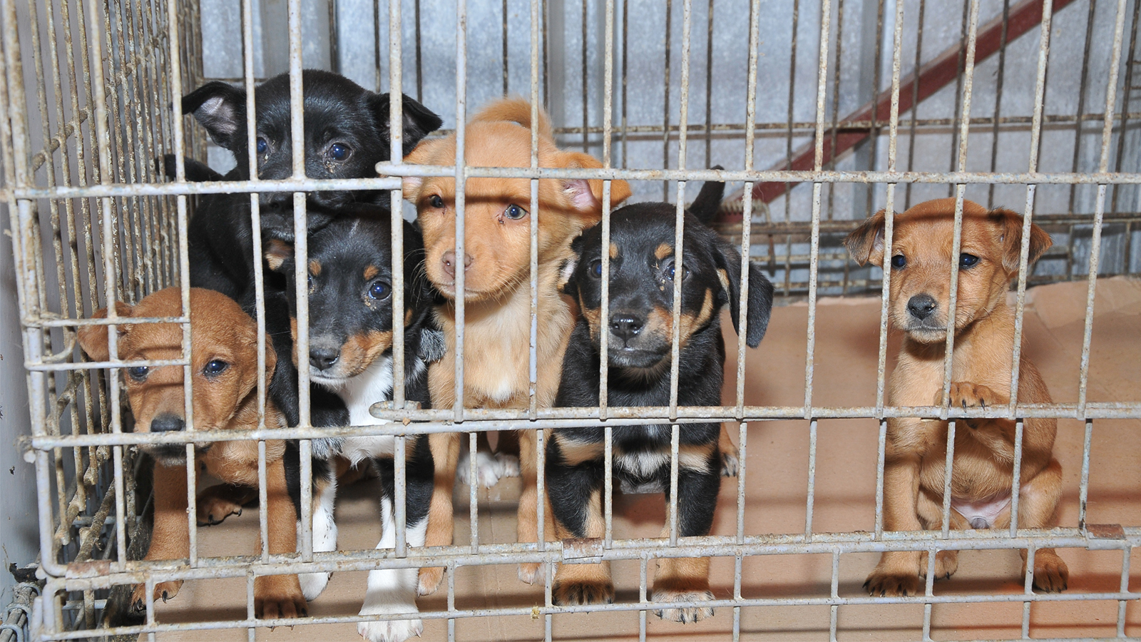 Lawsuit Moves Forward Against Pet Store and Phony Rescue Operations for Illegal Puppy Laundering Scheme - Animal Legal Defense Fund