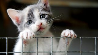 Colorado Passes Animal Possession Ban for Convicted Animal