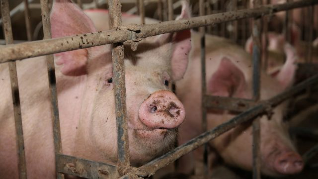 Ninth Circuit Affirms Dismissal of Almond Milk Labeling Lawsuit