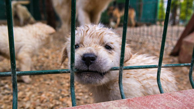 Cities Are Fighting Back Against Puppy Mills – But Some